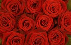 Rozen voor Valentijnsdag