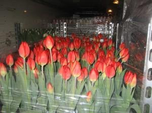bloemenvervoer
